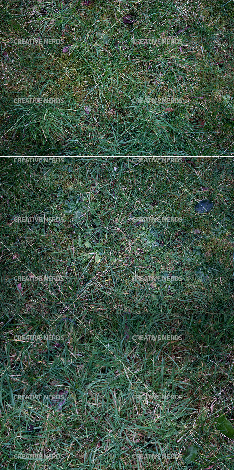 long grass texture preview Long hi res grass texture set