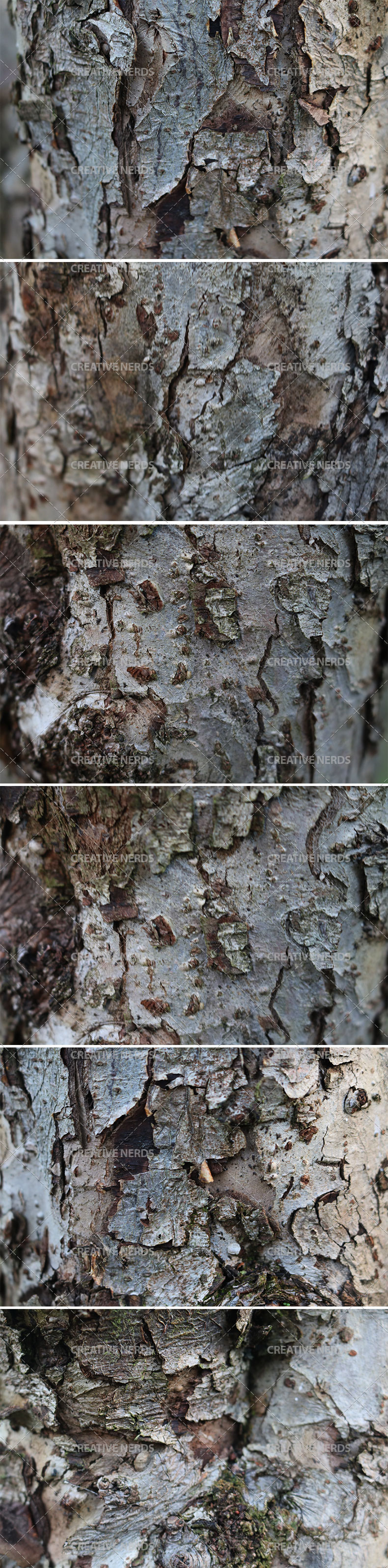 tree barked texture big preview Tree bark hi res texture set