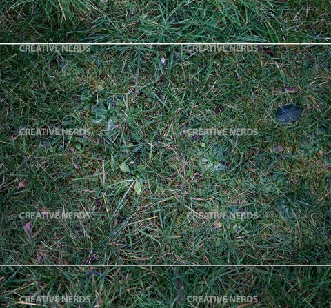 long-grass-texture-preview