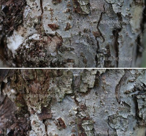 tree-barked-texture-big-preview