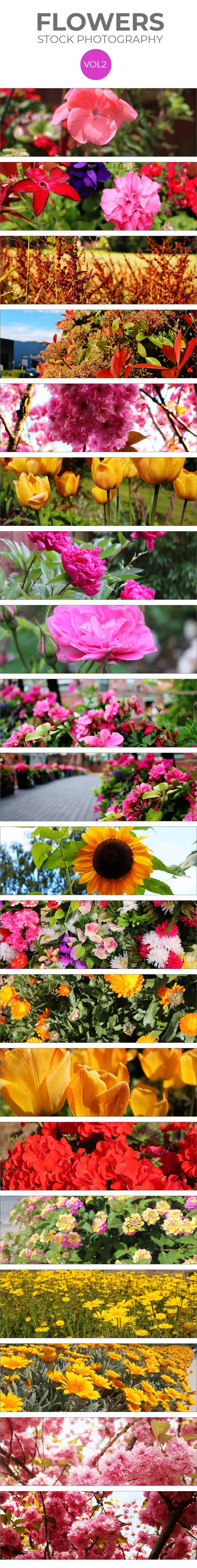 stock-flowers-vol-2